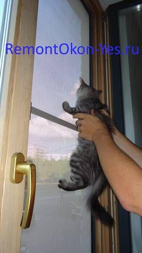 антикошка установка, сетка на окна антикошка купить