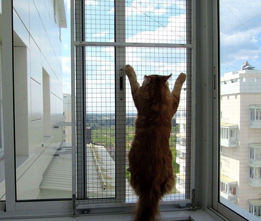 Сетка антикошка выдерживает вес взрослого кота